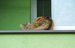 Shy cat Royalty Free Stock Photo