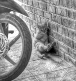 shy shy cat beside the wall stock images
