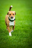 Shy dog Royalty Free Stock Photos