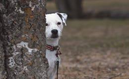 Shy dog Stock Image