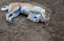 Shy dog sleeping on ground stock photo
