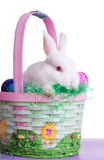 Shy Easter Bunny Royalty Free Stock Photo