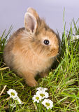 Shy easter bunny Stock Photo