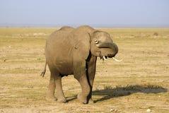Shy elephant royalty free stock photography