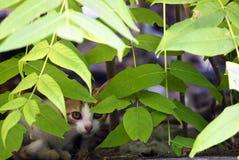 Shy Kitten Stock Photos