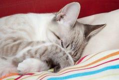 Shy kitten Stock Images
