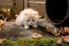 Shy kitten. Shy little kitten exploring the garden Royalty Free Stock Image