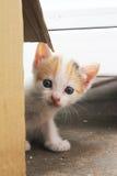 Shy kitten Royalty Free Stock Photos