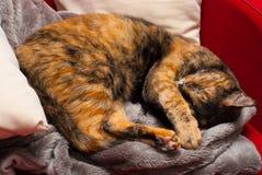 Shy kitty Stock Image