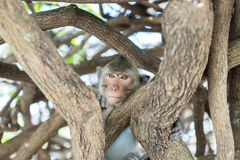 Shy Monkey in the Public Park Royalty Free Stock Photography