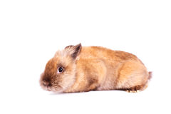 Shy rabbit  on white Stock Images