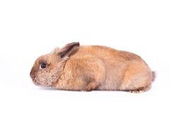 Shy rabbit  on white Stock Photo