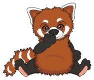Shy red panda Stock Photo