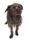 Shy Rescue Dog Stock Image