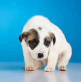 Shy and scared little stray puppy Royalty Free Stock Images