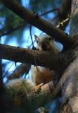 Shy squirrel says Hi Stock Photos