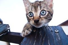 Shy tabby cat Royalty Free Stock Image