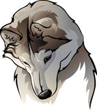 Shy wolf. Vector illustration head shy wolf Royalty Free Stock Photos