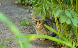 Shy young cat, look at the camera Stock Images