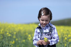 Shy young girl near canola field. Innocent shy cute child with yellow flower in hands expressing emotion Stock Photos