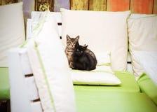 Siège de trois petit chats sur un oreiller Photos stock