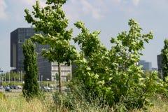 Siège social de Krupp avec des arbres devant lui image stock