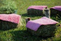Sièges faits de foin de paille et bois de palette couverts de tapis violet Photo libre de droits