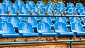 Sièges verts de stade Images libres de droits
