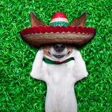 Sièste de chien Photo libre de droits