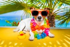 Sièste de chien Photos libres de droits