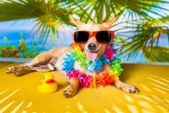 Sièste de chien Photographie stock libre de droits