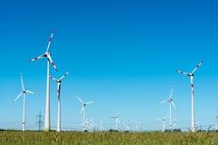 Sił wiatru rośliny w Niemcy Fotografia Royalty Free