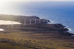 Siły wiatru roślina na oceanu brzeg fotografia royalty free