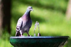 Si è tuffato la fontana Fotografie Stock Libere da Diritti