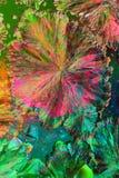 όξινα κιτρικά ζωηρόχρωμα κρύ&si Στοκ Φωτογραφίες