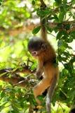 Si comporta male la scimmia Fotografia Stock Libera da Diritti