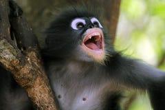 Si comporta male la scimmia Immagine Stock Libera da Diritti