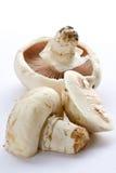 Si espande rapidamente i funghi prataioli Immagine Stock
