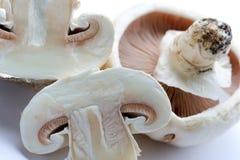 Si espande rapidamente i funghi prataioli Fotografia Stock