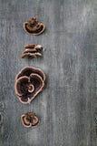 si espande rapidamente il legno Fotografia Stock