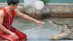 Si RACHA, THAILAND - JANUARY 17, 2018: Tamer of crocodiles shows performance in arena with crocodiles. Si RACHA, THAILAND - JANUARY 17, 2018: Tamer of crocodiles stock video footage