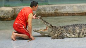 Si RACHA, THAILAND - JANUARY 17, 2018: Tamer of crocodiles shows performance in arena with crocodiles. Si RACHA, THAILAND - JANUARY 17, 2018: Tamer of crocodiles stock video