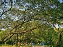 si ramifica gli alberi Fotografie Stock Libere da Diritti