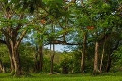 si ramifica gli alberi Fotografia Stock