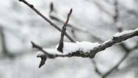 Si ramifica la neve di gelo archivi video