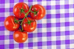 Si ramificano cinque pomodori Fotografia Stock Libera da Diritti