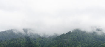 Si rannuvola il taiga in Siberia Fotografie Stock