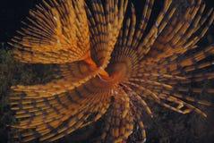 Si sviluppa a spirale la notte Fotografie Stock