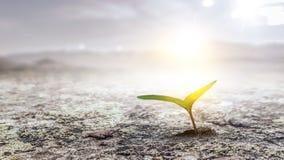 Siać rośliny na ziemi obraz stock