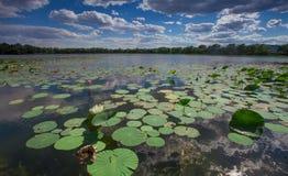 Ásia China, Pequim, palácio de verão velho, lagoa de lótus Fotografia de Stock